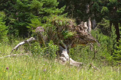 袋鼠的自然奇观,袋鼠雕塑在森林的自然奇观