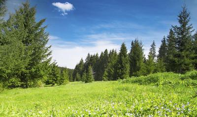 森林和自然植被景观