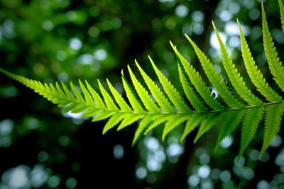 叶子植物树绿色自然