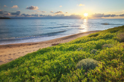 春天海岸的海上。天空、 海上和绿草。自然成分