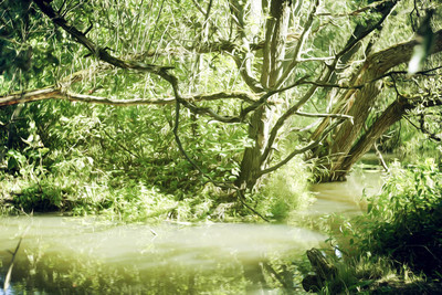 森林流。水面, 自然, 森林