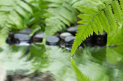 绿色的叶子的植物与蕨类植物和卵石上水