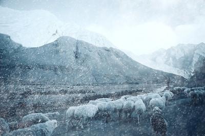山地山水羊群