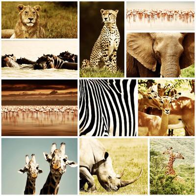 非洲的动物野生动物园拼贴画