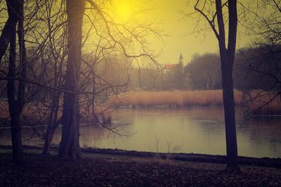 老式照片的诡异森林