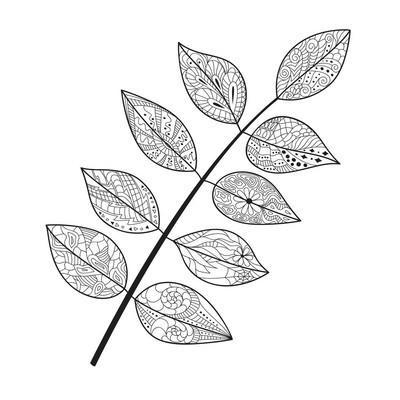 叶涂鸦。矢量图