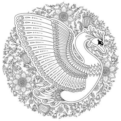 手绘装饰天鹅。成人着色书的图像,第页