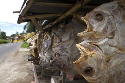 在印度尼西亚-东南亚地区出售鱼干