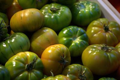 绿色西红柿