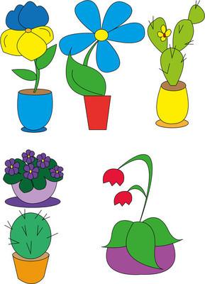 在花盆里的盆栽的植物