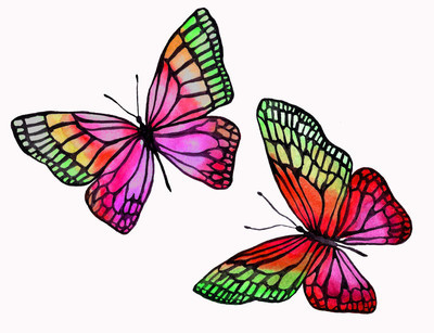 黑色轮廓水彩蝴蝶插图
