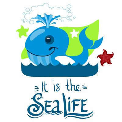 蓝鲸和海星
