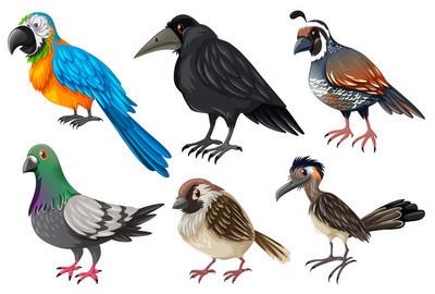 不同类型的野生鸟类