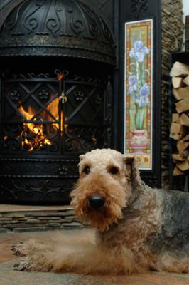 狗的壁炉旁