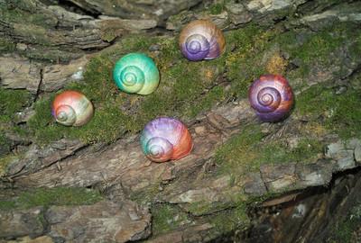 在蜗牛壳绘