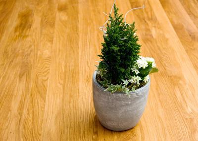 绿色的植物