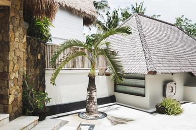 Decorative  small palm tree
