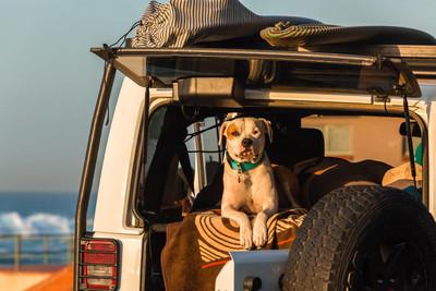 狗冲浪车早上