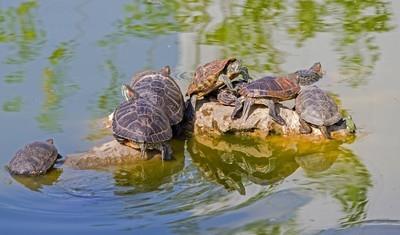 龟的石头上