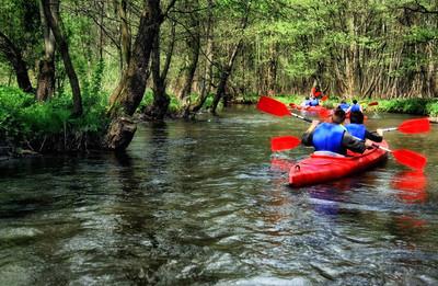 游客在森林河上皮划艇