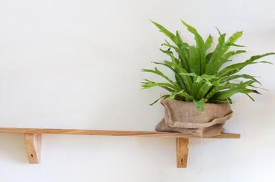 在木架子上的小树盆栽植物装饰室内的房间