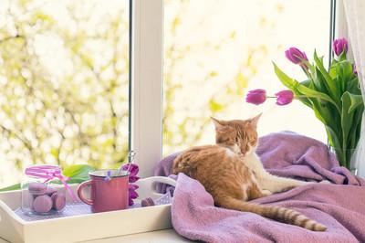紫罗兰色的阳光的舒适的家的概念