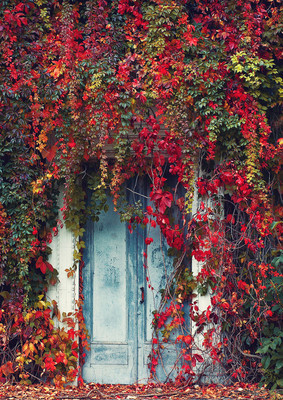 The Door  Decorated with Wild grapes