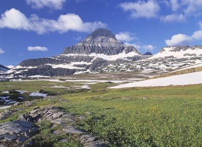 高寒草甸,远处,沃特顿冰川国际和平公园雷诺山冰川百合