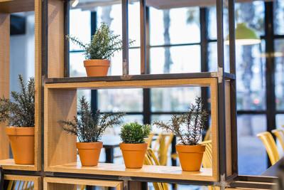 绿色盆栽植物在美丽的锅室外