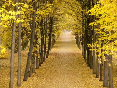 秋天的图片