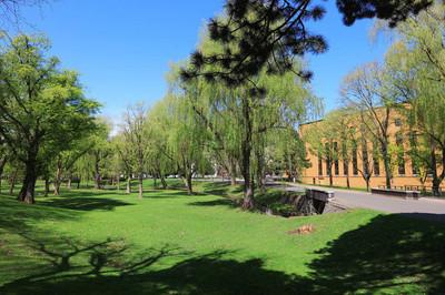 校园里的风景在日本北海道大学