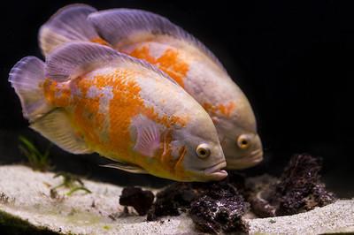五彩斑斓的热带鱼,在水族馆