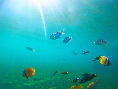 与热带鱼的水下景观。阳光明媚的海底场景,与珊瑚鱼