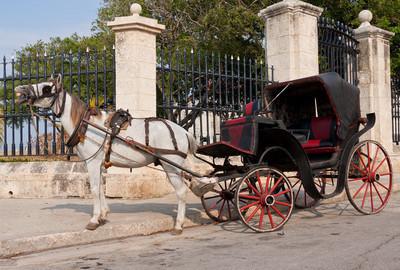 马车等候游客在哈瓦那老城