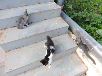 在户外楼梯的小猫