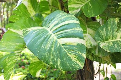 绿色的热带植物