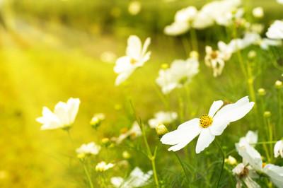 大自然中的白色花朵