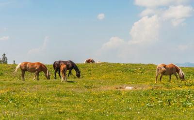 野生动物,Golte 斯洛文尼亚