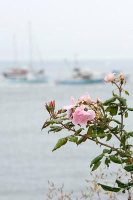 渔船的玫瑰花