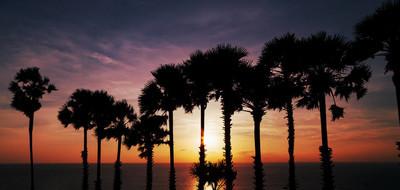 一排椰树, 美丽的天空日落或日出在美丽的自然背景的热带海景色泰国普吉岛