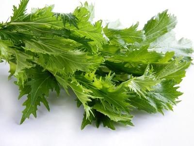 种的绿色沙拉生菜