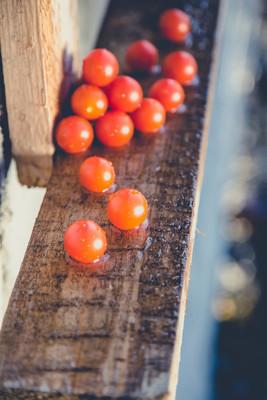 西红柿在雨中的木制的背景