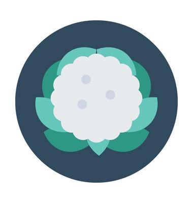 花椰菜平面矢量图标