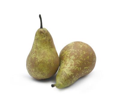 会议的两个梨