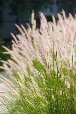 花园里的草地