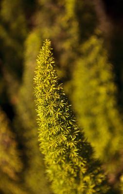 明亮的绿色蕨类植物背景