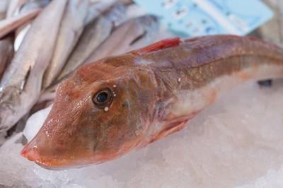在冰上的红乌鱼