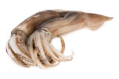 白色背景上的鱿鱼