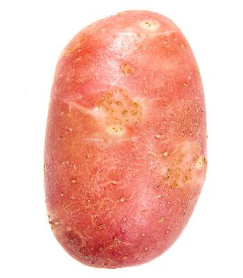 马铃薯在白色背景上孤立