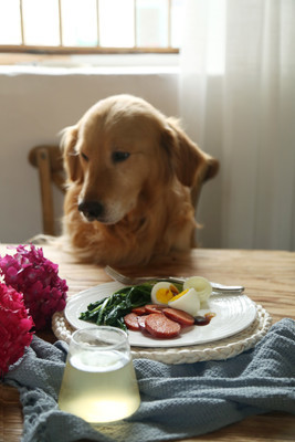 hei.等待吃鸡蛋的地瓜